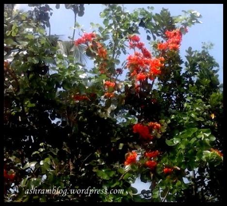 palaasha flower